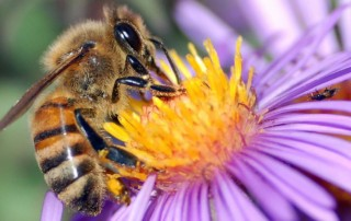 les bienfaits -le miel guerit les gens